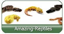 Amazing Reptiles High quality breeding