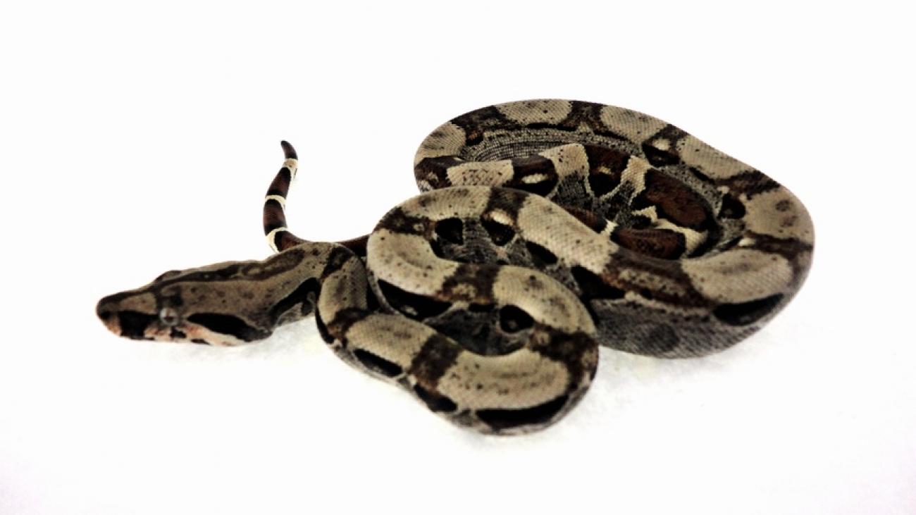 Schlangen kaufen online dating