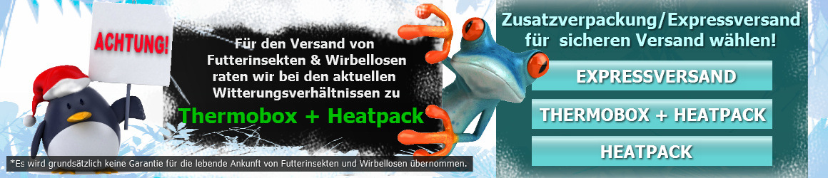 schaben kaufen deutsche schabe blattella germanica with. Black Bedroom Furniture Sets. Home Design Ideas
